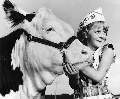 4H Cow.jpg