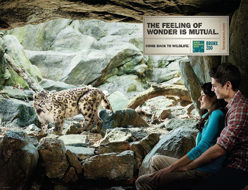 Bronx Zoo - Leopard