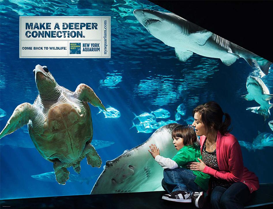 NY Aquarium - Shark