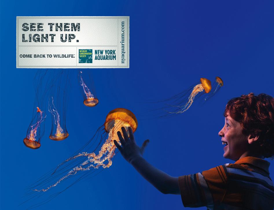 NY Aquarium Stingers