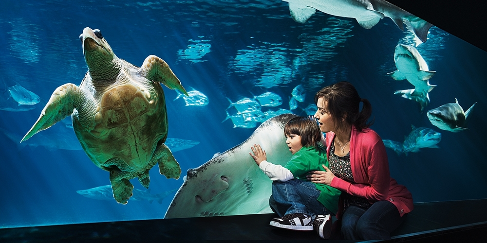 "NEW YORK AQUARIUM<strong>BRAND POSITIONING, BRAND ADVERTISING, EVENT PROMOTION, IN-PARK SIGNAGE</strong><a href=""/ny-aquarium"">More</a>"