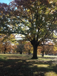 Pretty fall foliage; great views for warming up