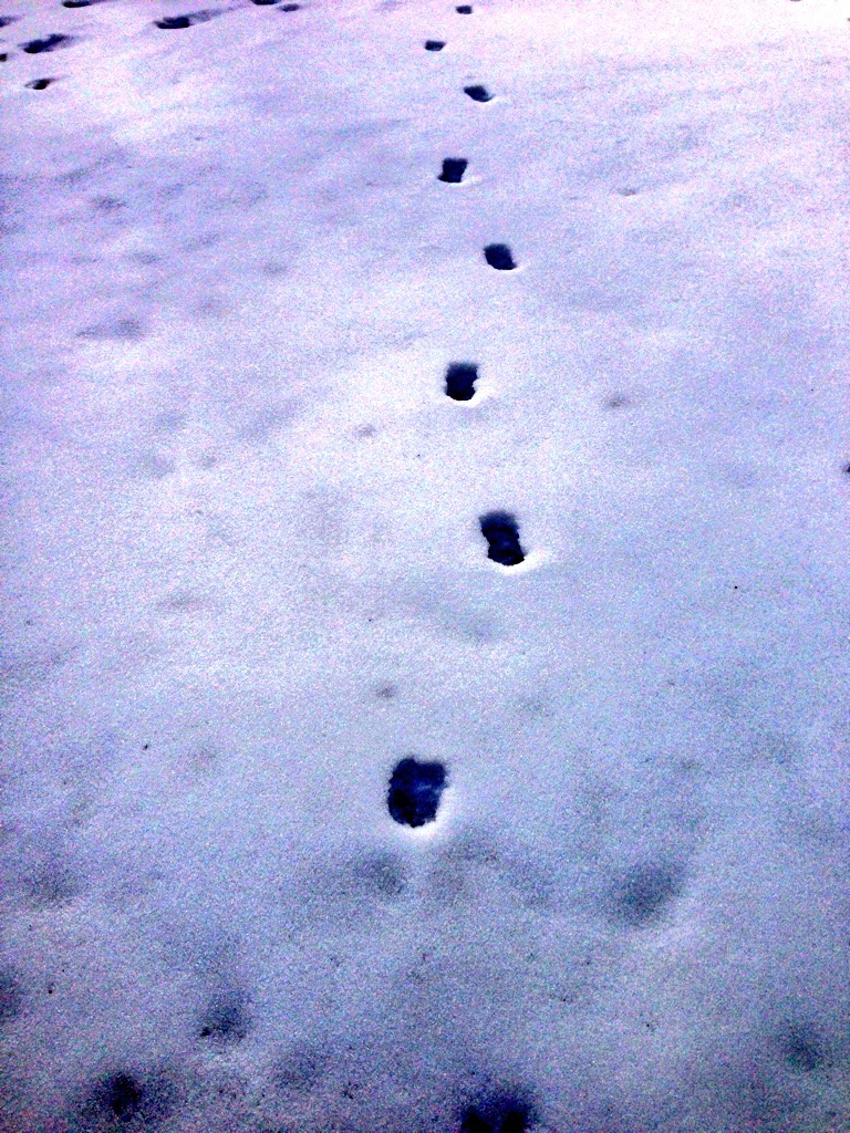 Deer prints spotted during a wintry run