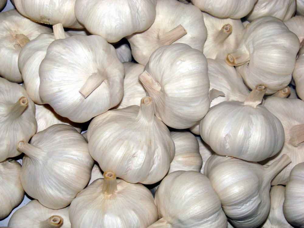 Pure-White-Garlic.jpg