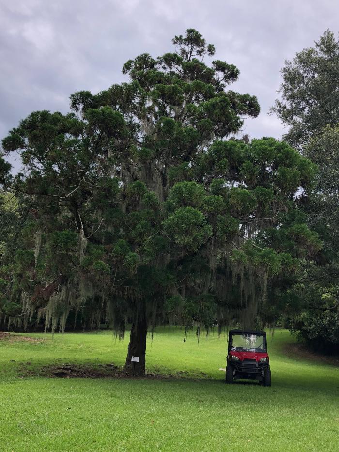 Mature tree near Bird City