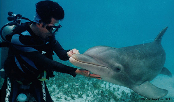 mx-diving-with-dolphins-cozumel.jpg
