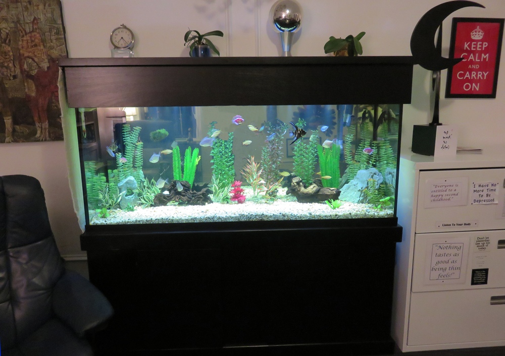 office-fish-tank_5196.JPG