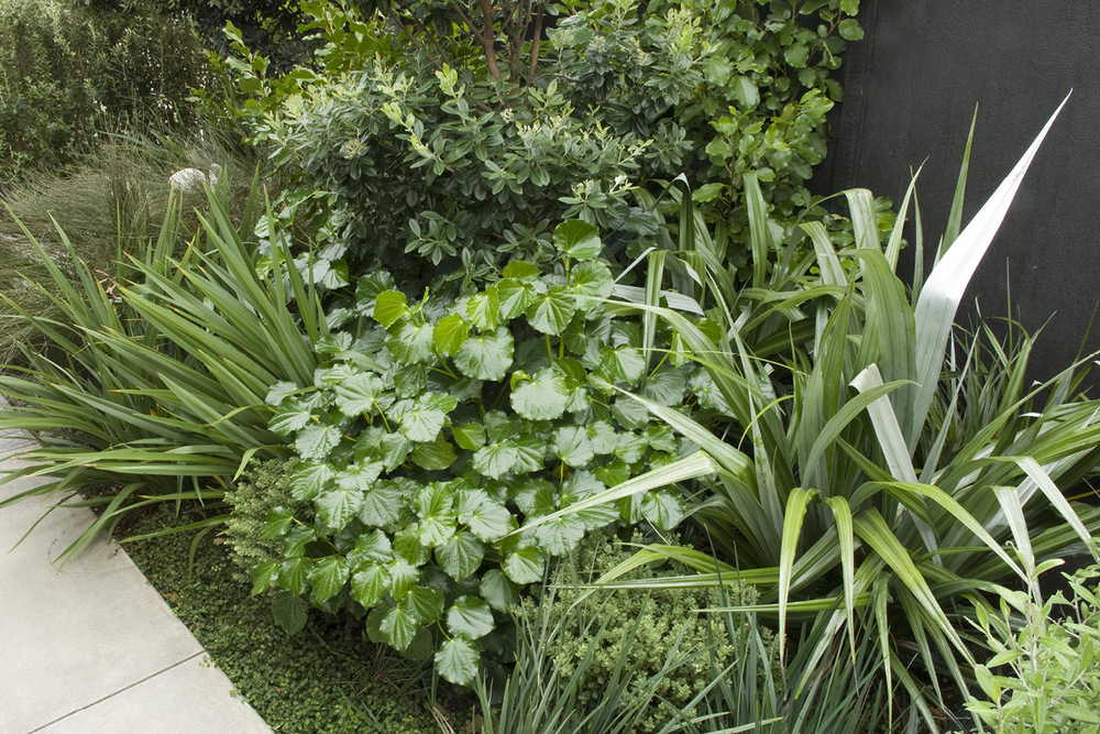 Raumati Garden