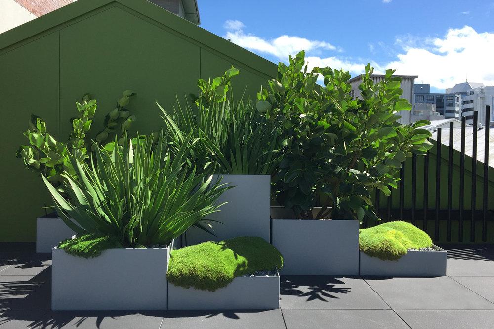 Rooftop_garden_City.jpg
