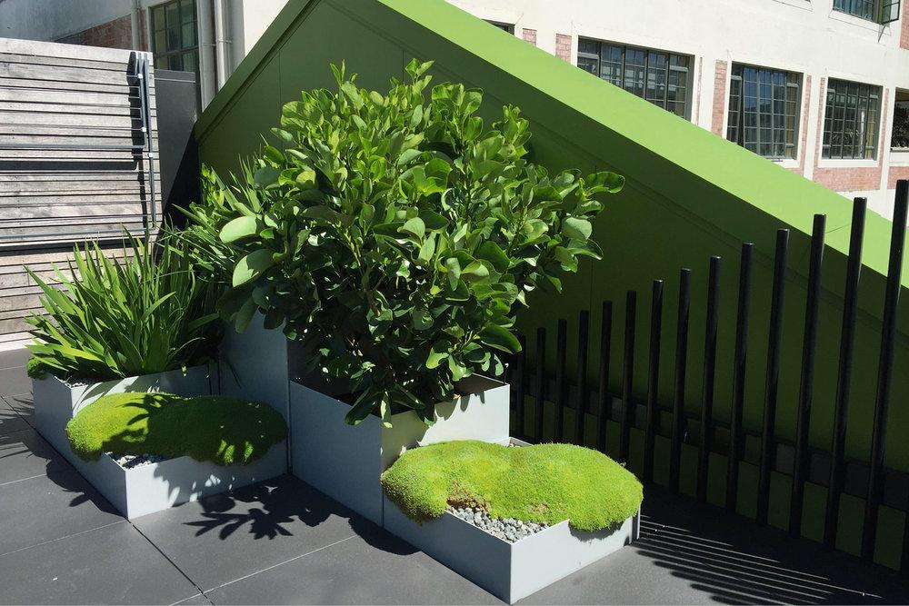 Rooftop_garden_City_mnla.jpg