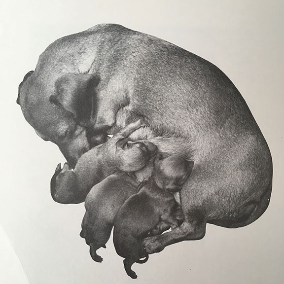 My Puppy is Born.  Joanna Cole with Photographs by Jerome Wexler