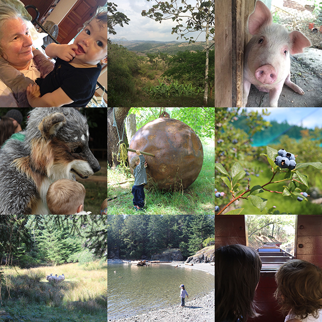 Honeyman snuggles; Costa Rica property; Rosie the pig; Wolf at Oregon Country Fair; Lasqueti Island: washed up ship part, blueberry farm, feral sheep, AJ at the shore; Steam Train at Tilden Park.