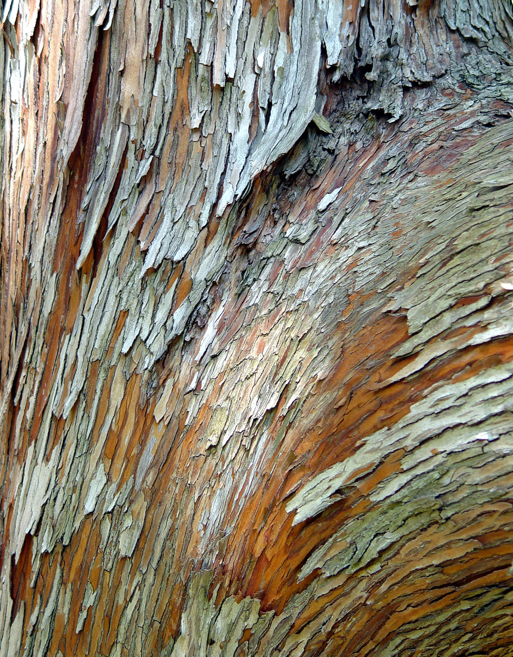 Bark Series XV
