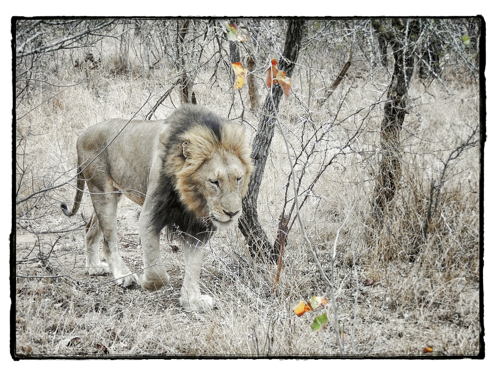 Thornybush #1