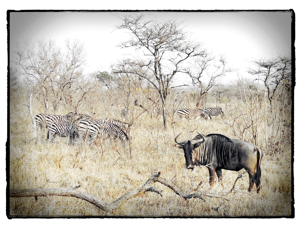 Thornybush #5
