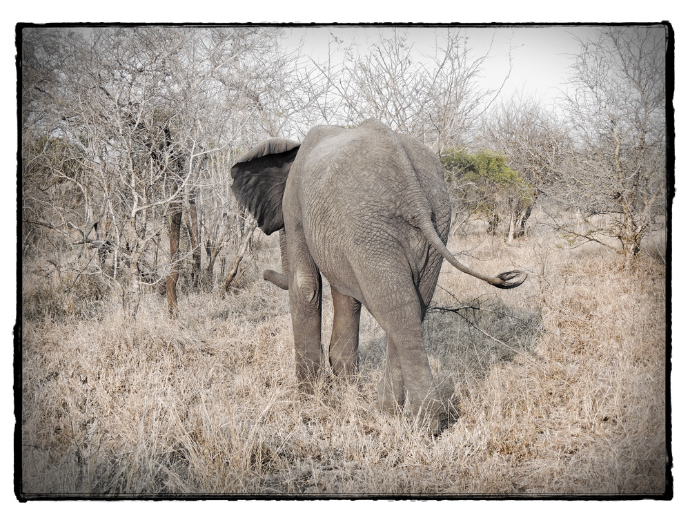 Thornybush #18