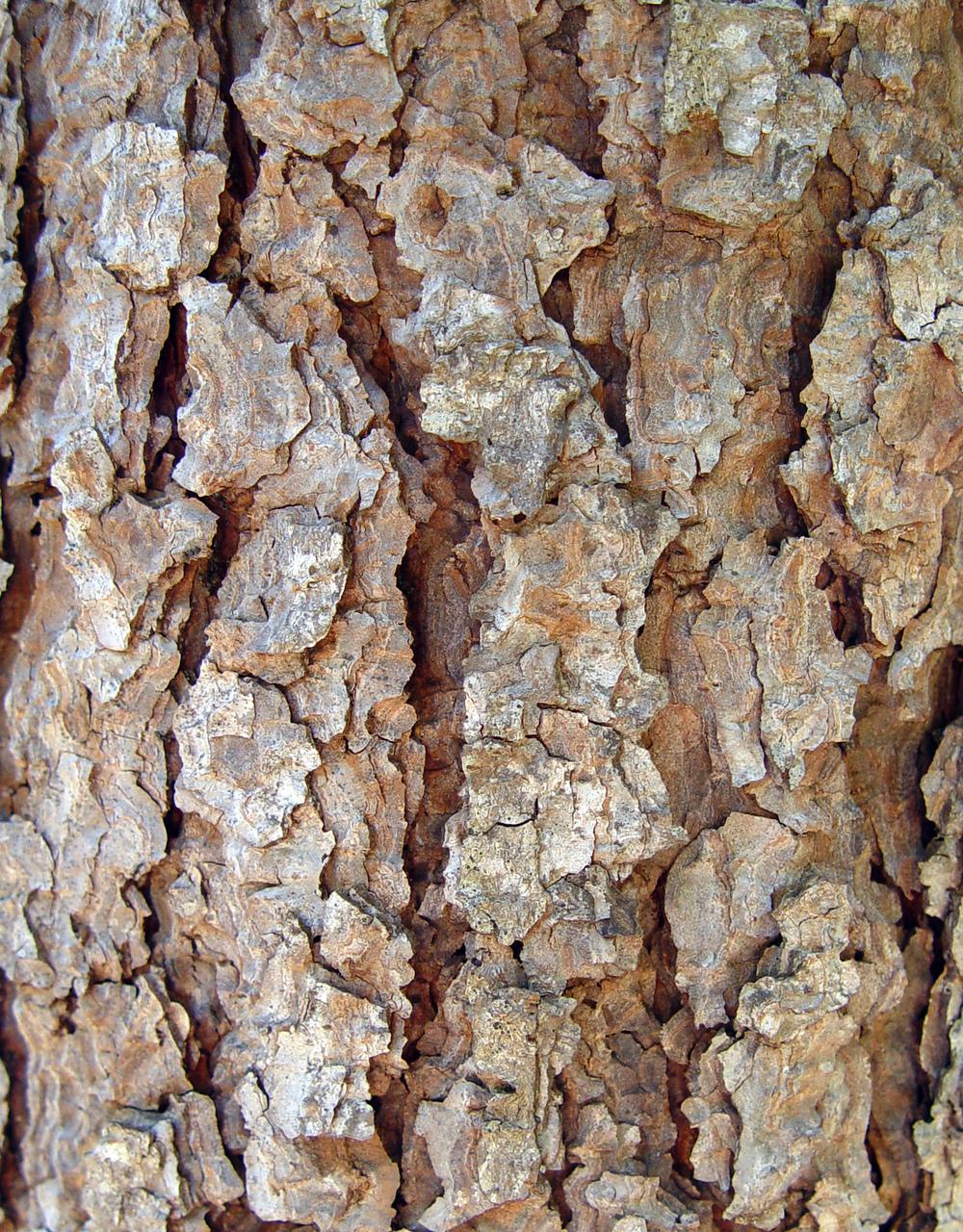 Bark Series