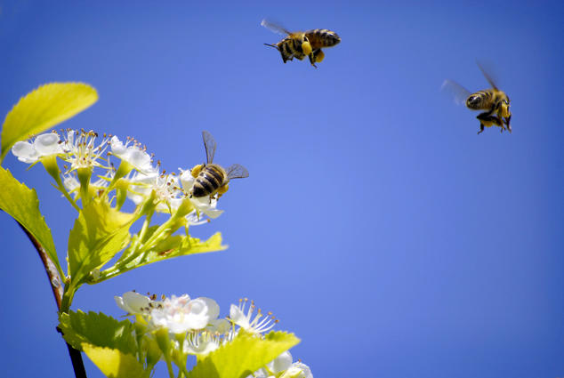 Honey Month.jpg