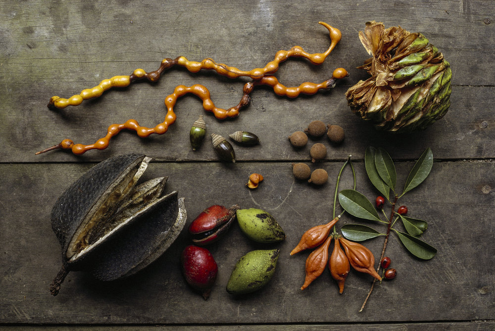National Geographic photo of Seeds