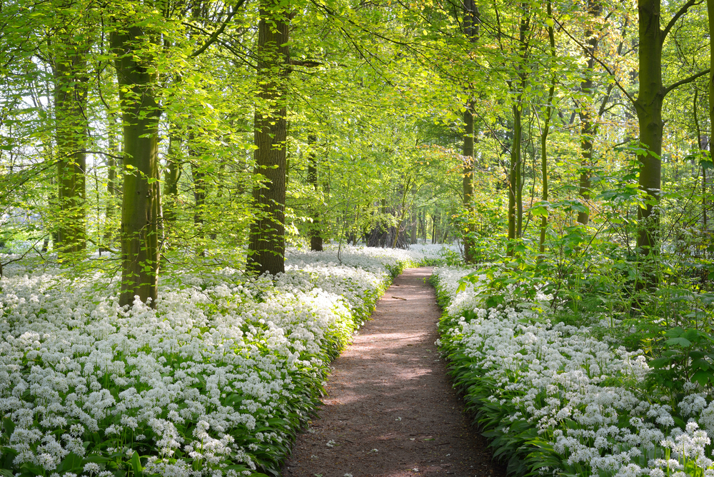 flowering walkway in forest.jpg