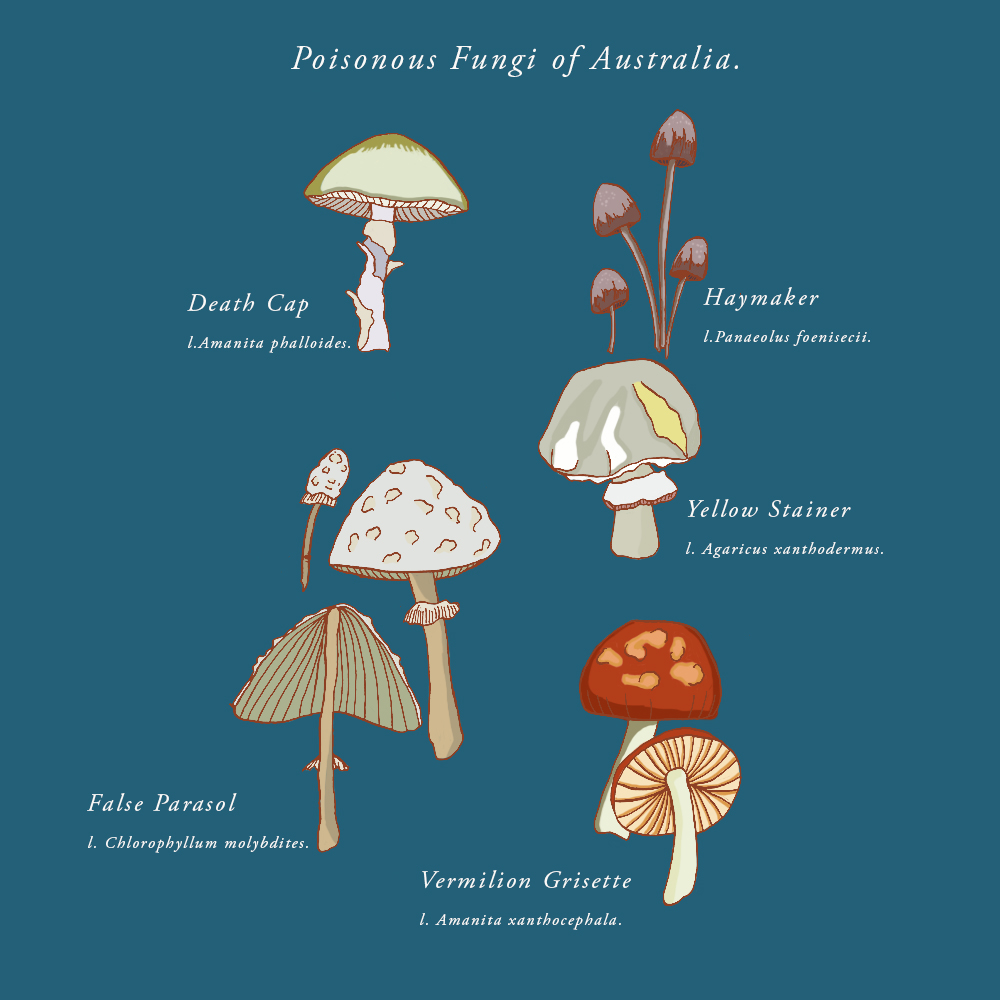 Poisonous Fungi of Australia I, ink & digital colour, 2018.