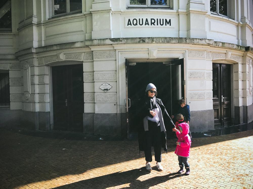 amsterdam - artis