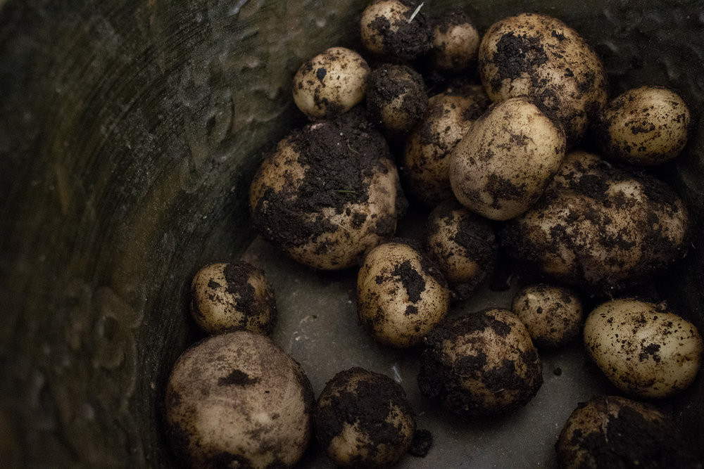sodlish-mypotatoes.jpg