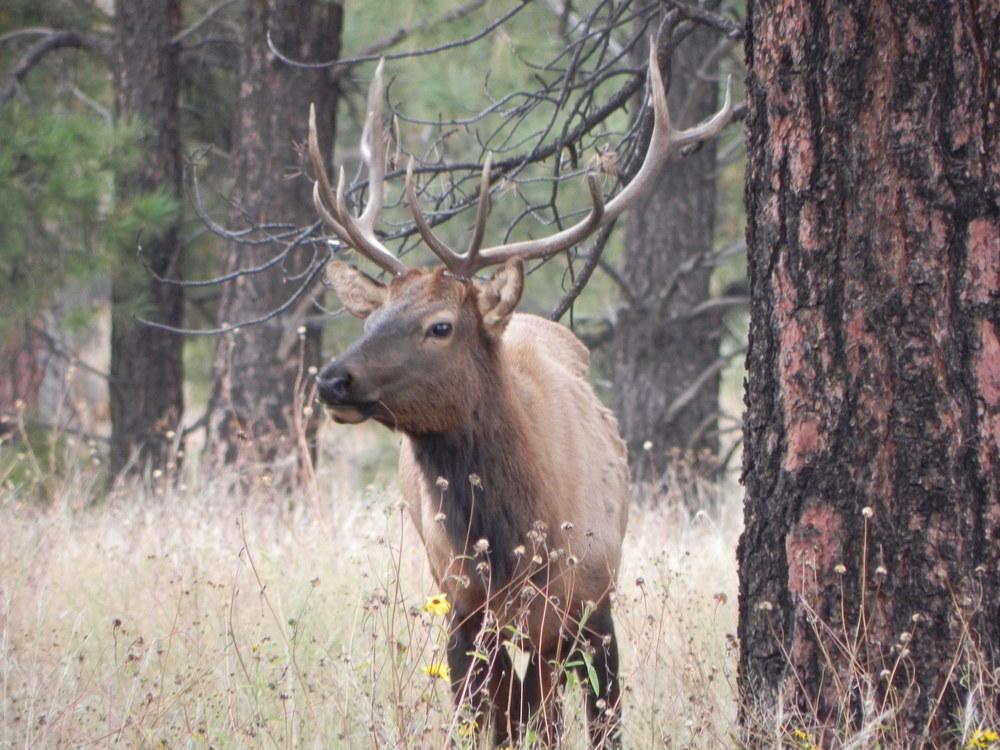 Big Elk.jpg