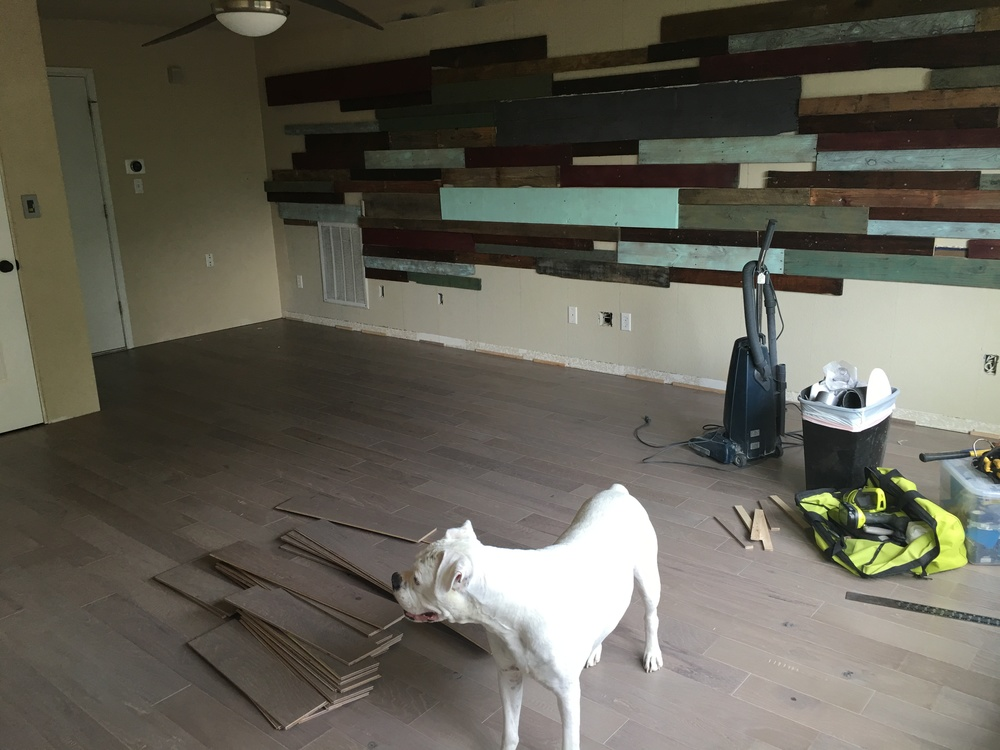 My dog Finn and an almost completed room.
