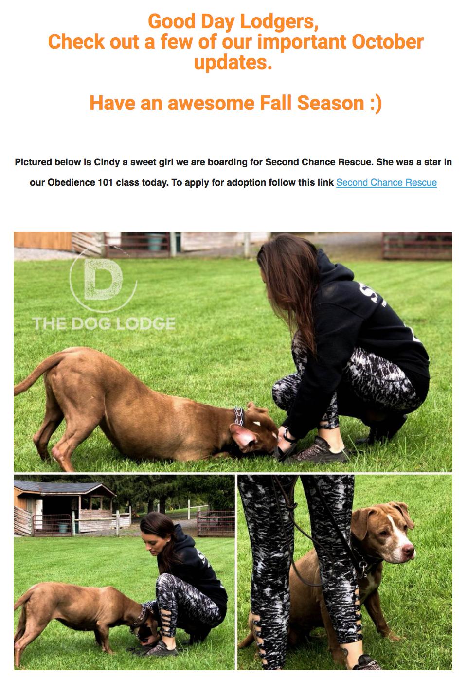 TheDogLodgeNewsletterOctober17.png