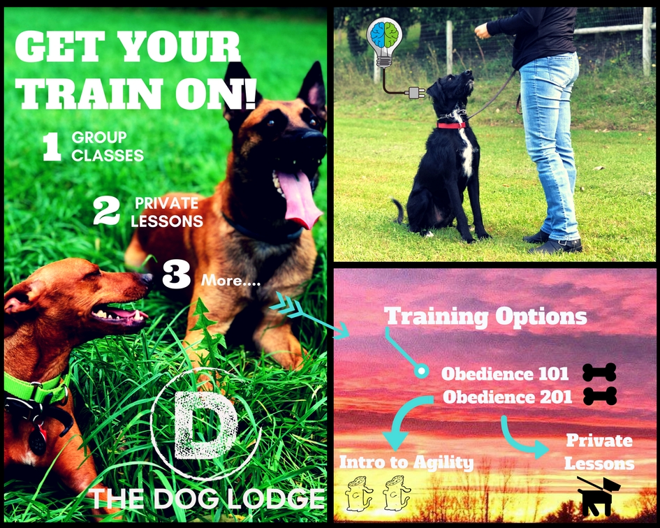 dog-lodge-lessons-syracuse-training-group-class.jpg