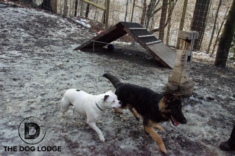Duke and Winnie 2 12-2017-2.jpg