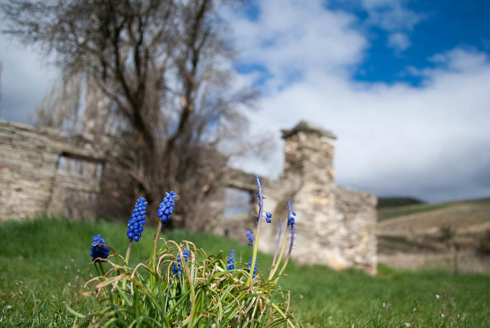 hyacinth ruins-1.jpg