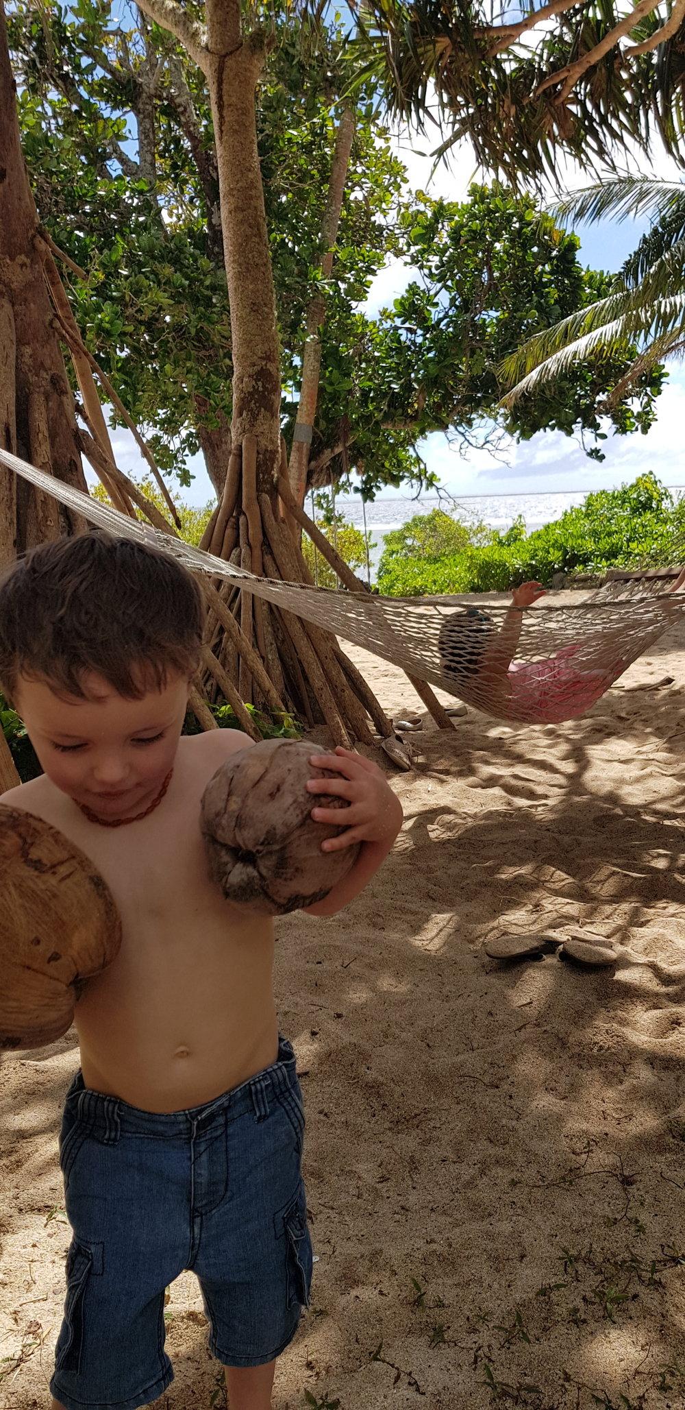 tonga coconuts.jpg