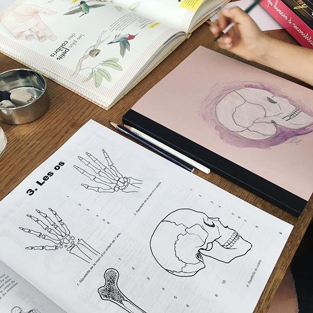 Émy a commencé un cahier sur la biologie humaine. J'adore sa couverture ! 👍🏻💀 #cahiersh #loveoflearning