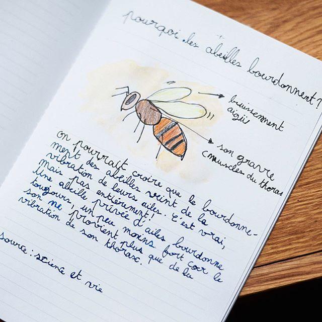 Le Cahier Curieux d'Émy avec sa toute première question ❤️🐝 Je sens que l'on va apprendre beaucoup de choses ! 🤓 #cahiercurieux #cahiersh