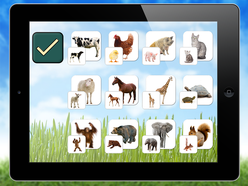 Learn the different names of adult and young animals using split decks