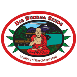 big_buddha_seeds_amsterdam_seed_center_2.png