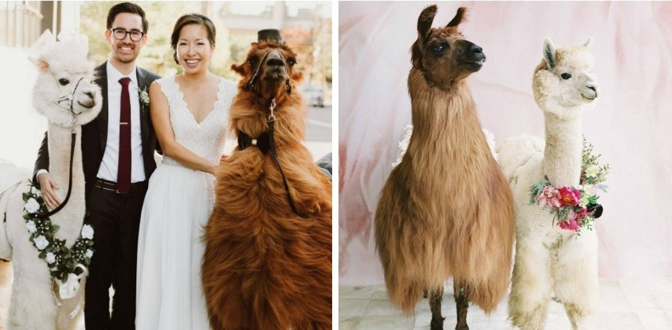 Llama Rental.jpg
