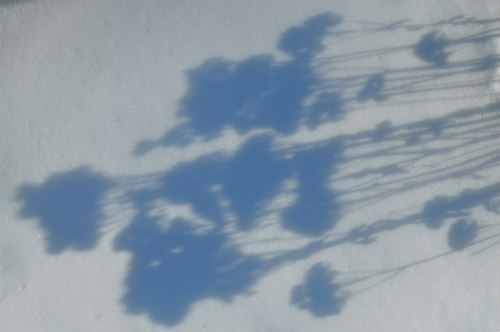 Winter shadows always inspire!