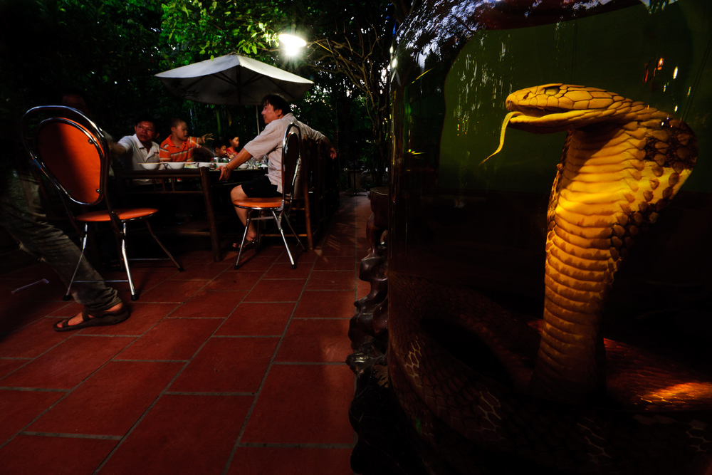 The evening drink special at a Le Mat restaurant in Vietnam is king cobra in rice wine. Venomous reptiles are cooked to order to satisfy discriminating diners. Cobra dishes are expensive, so most patrons order less costly meals, perhaps with a shot of cobra wine on the side.