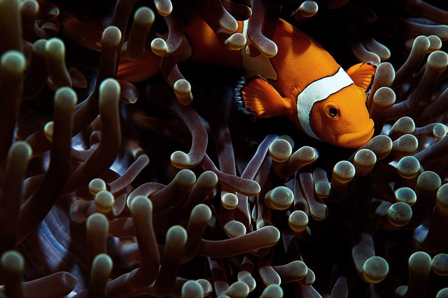 Oceans_WestPapua_100925_01425.jpg