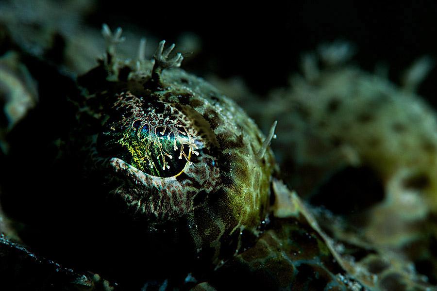 Oceans_WestPapua_101001_06534.jpg