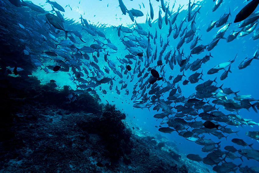 Oceans_WestPapua_101003_06764-.jpg