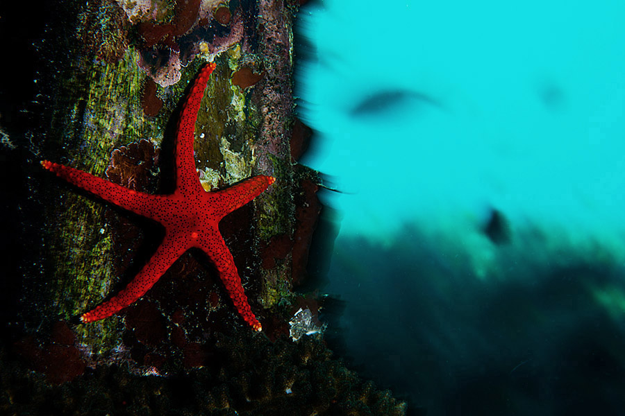 Oceans_WestPapua_101003_06989.jpg