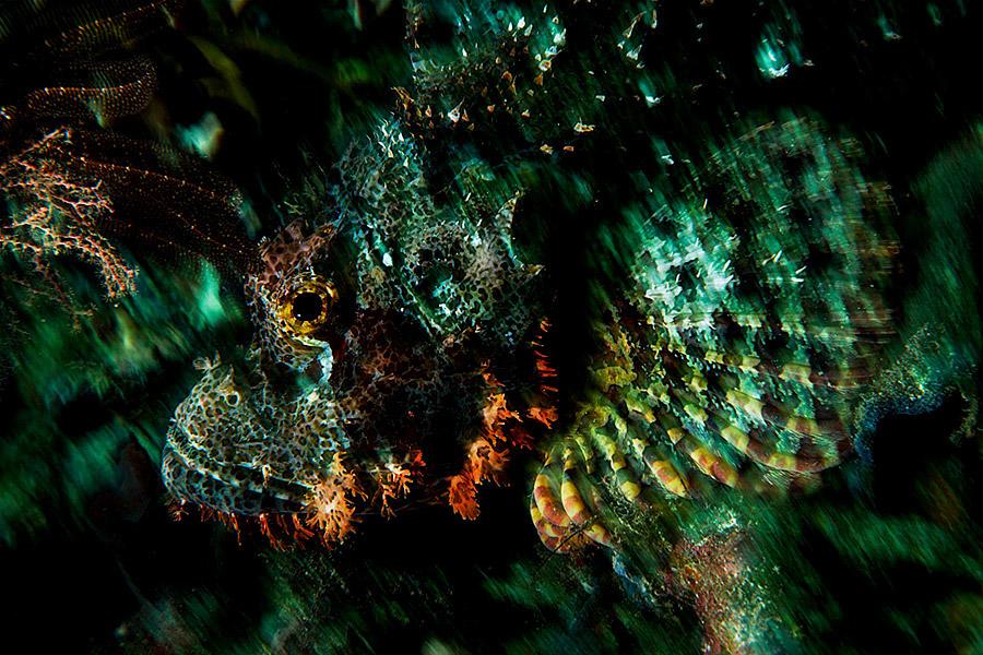 Oceans_WestPapua_101003_07164.jpg
