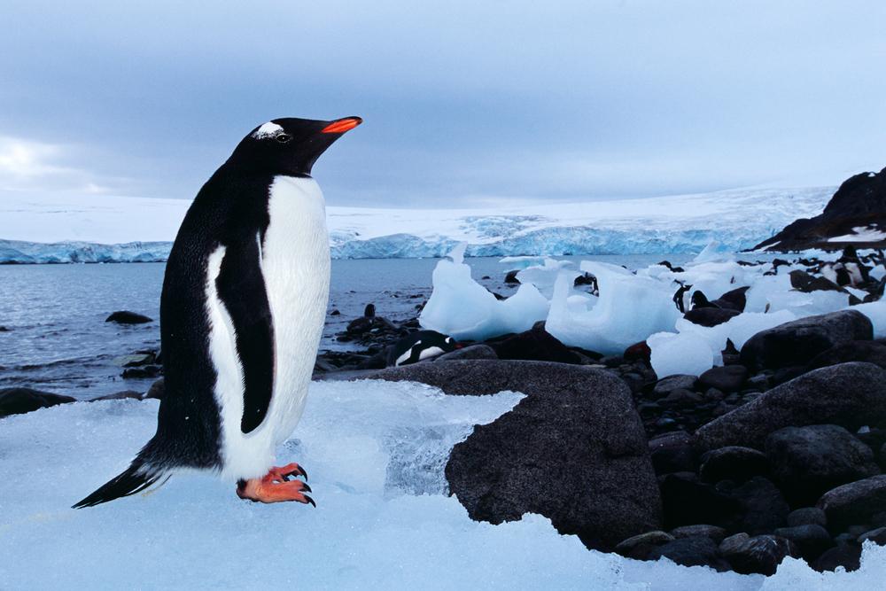 Antarktis forts 27.jpg