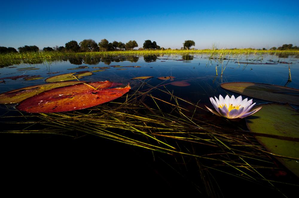 Botswana_05443.jpg