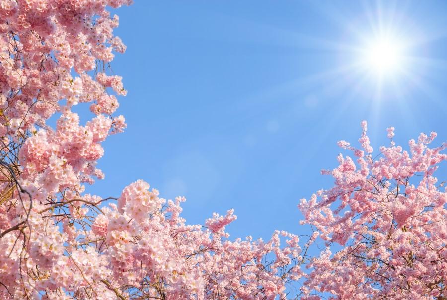 Wedding Planner London Cherry Blossom