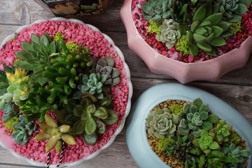 vday succulents.jpg